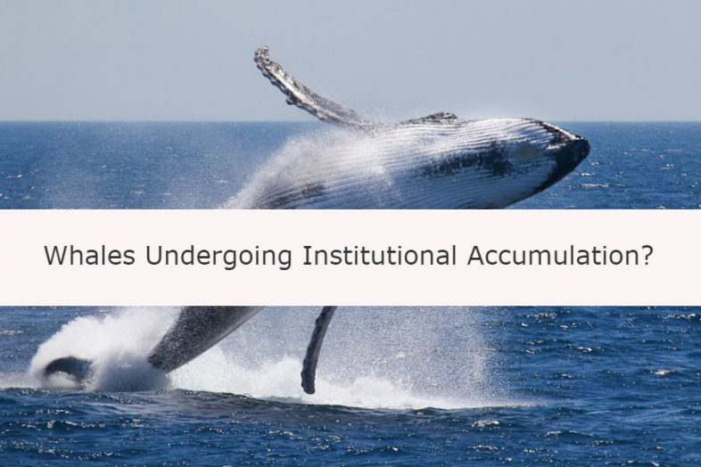 Bitcoin Price: Whales Like James Richman and Michael Novogratz Undergoing Institutional Accumulation? | CCG