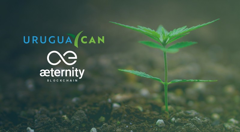 Uruguay Can launches the world's first traceability platform on blockchain for medical cannabis | CCG